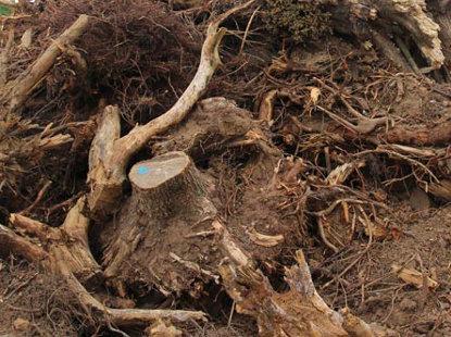 tree roots shredding